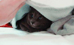 qual a melhor toalha